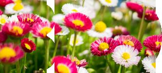 proces uprawy florens opole