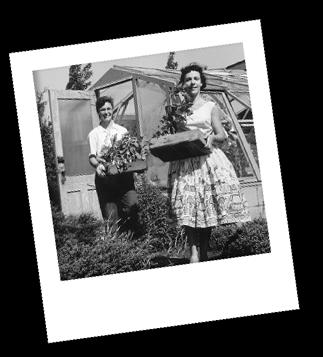 historia-firmy historia firmy florens opole