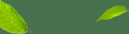 listki-lewa strona główna florens opole