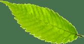 listki-prawa strona główna florens opole