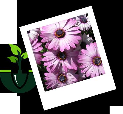 przyjazne-warunki-uprawy-roslin proces uprawy florens opole