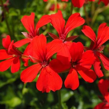 1-2 rośliny jednoroczne florens opole