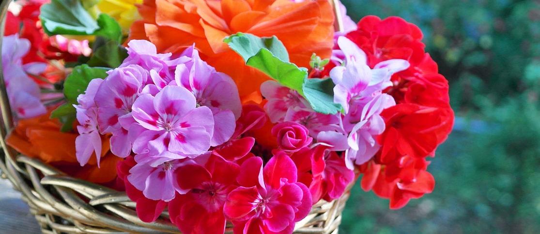 1.-Najlepsze-rosliny-kwitnace strona główna florens opole