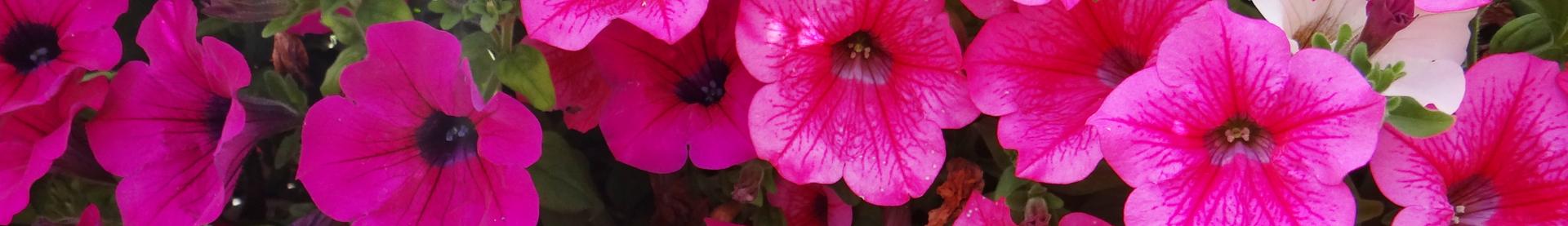 1 rośliny zimowe i wczesno wiosenne florens opole