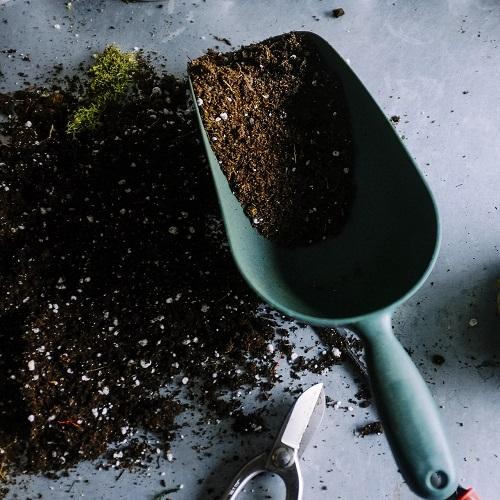 Krzewy kwitnące…sadzenie, pielęgnacja i zabezpieczenie przed zimą florens opole
