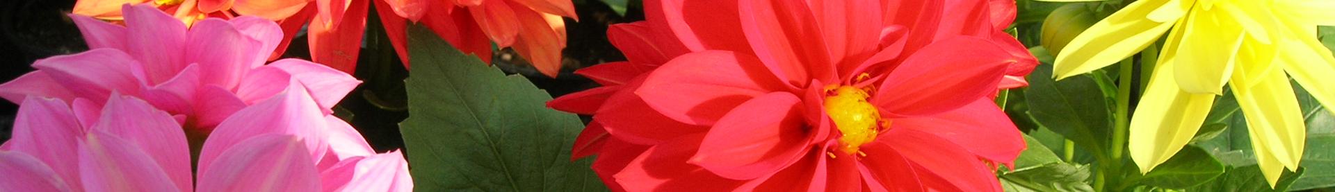 12 rośliny zimowe i wczesno wiosenne florens opole