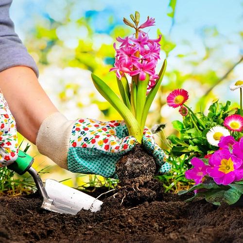 13 Czym są rośliny dwuletnie? florens opole