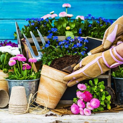 Pielęgnacja roślin jedno- i dwuletnich na rabatach i kwietnikach florens opole