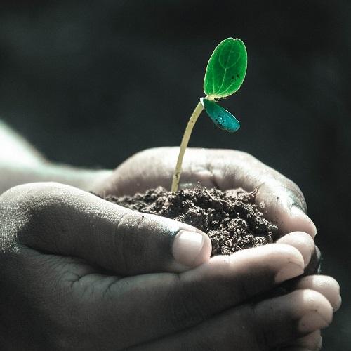 Jak chronić rośliny jednoroczne? florens opole