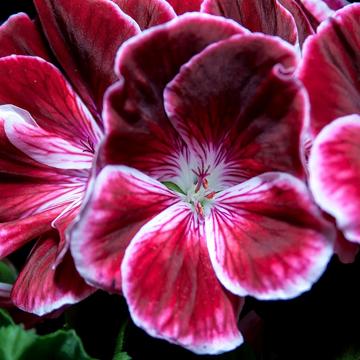 2-1 rośliny jednoroczne florens opole