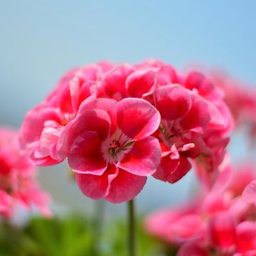 3-2 rośliny jednoroczne florens opole