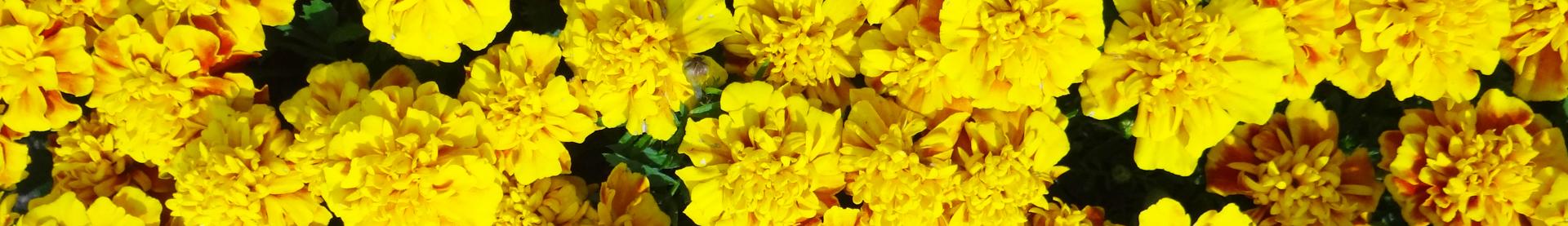 4 rośliny zimowe i wczesno wiosenne florens opole