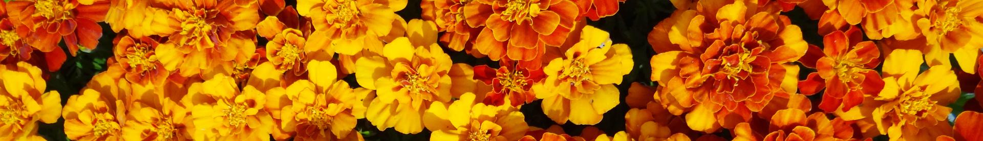 5 rośliny zimowe i wczesno wiosenne florens opole