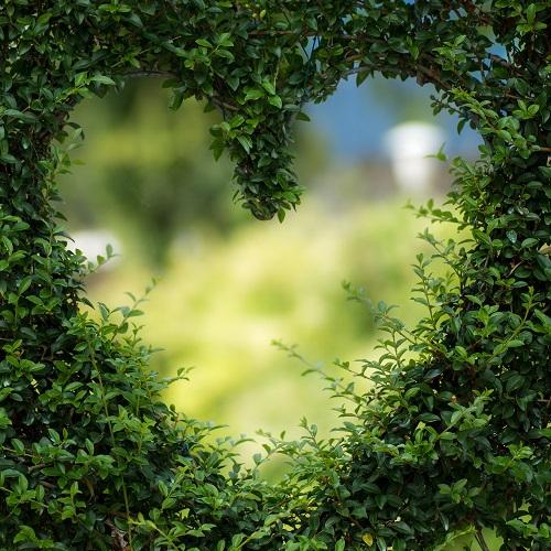 6-dodatkowe Żywopłoty….jak sadzić? florens opole