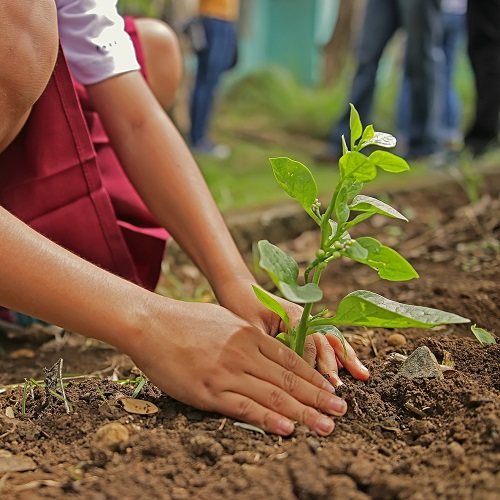 Jak sadzić drzewa i krzewy? florens opole