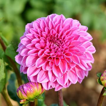 8-2 rośliny jednoroczne florens opole