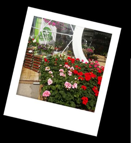 franczyza-kwiaciarnia franczyza florens opole