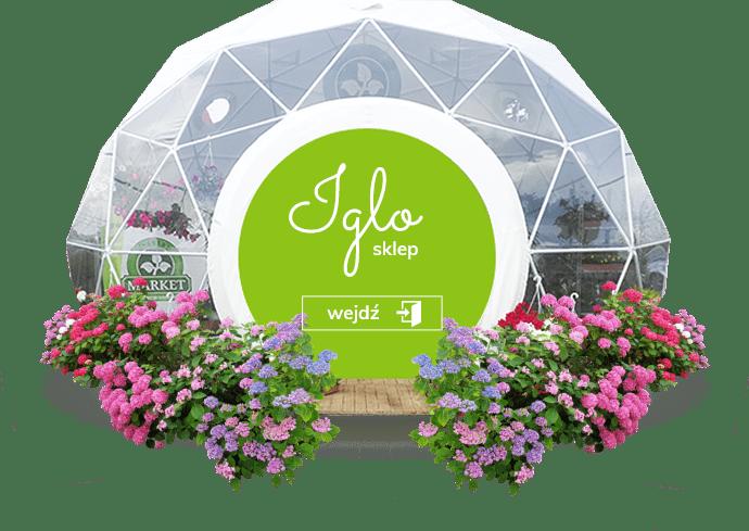 nowe-iglo-sklep strona główna florens opole