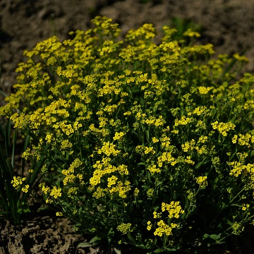 10 rośliny wieloletnie florens opole