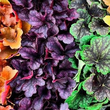 12 rośliny wieloletnie florens opole