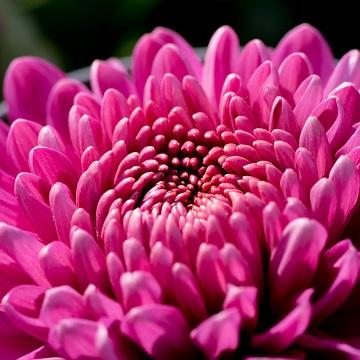 15 rośliny letnie i jesienne florens opole