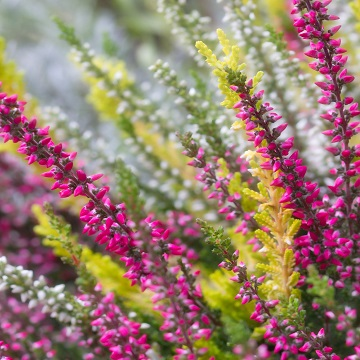 16 rośliny letnie i jesienne florens opole