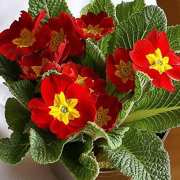 2 rośliny zimowe i wczesno wiosenne florens opole
