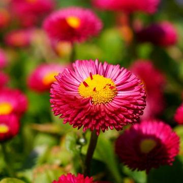 3 rośliny zimowe i wczesno wiosenne florens opole