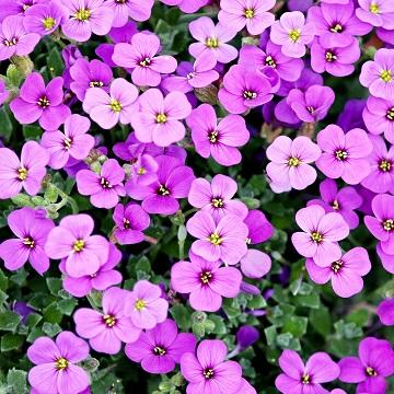 6 rośliny wieloletnie florens opole