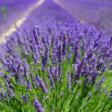 8 rośliny wieloletnie florens opole