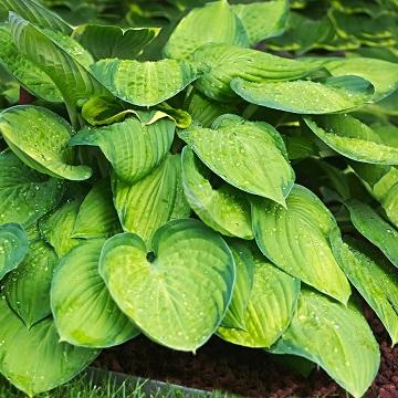 9 rośliny wieloletnie florens opole