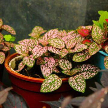 IMG_20190616_135440-360x360 rośliny jednoroczne florens opole