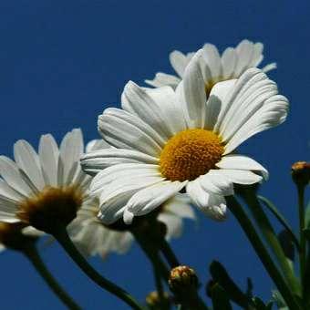 IMG_20190616_135550 rośliny jednoroczne florens opole