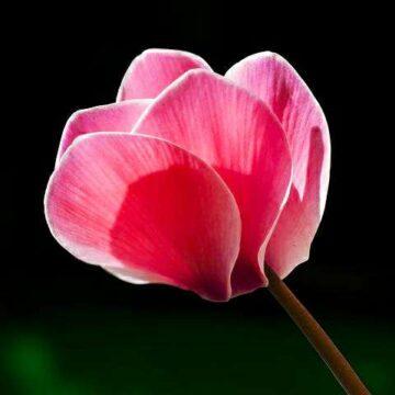 IMG_20190616_140846-360x360 rośliny letnie i jesienne florens opole