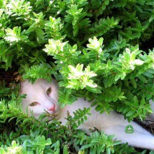 rośliny do ogrodów z kotem