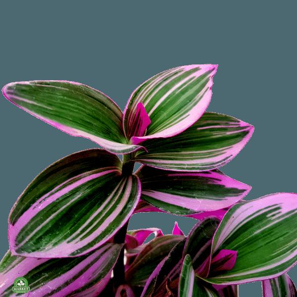 strona główna florens opole